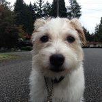 Max  is looking so sweet in his selfie photo.