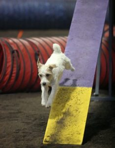 Max continues his agility training with zest.
